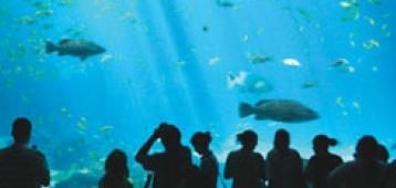 Мега-аквариум